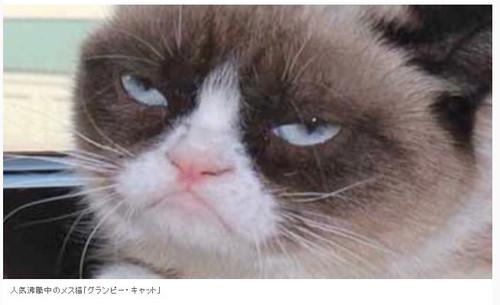 Grumpycat0501