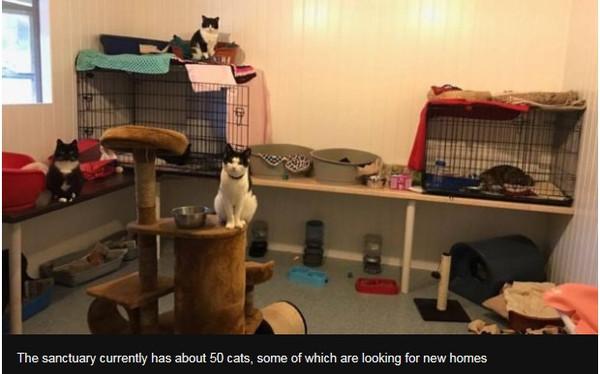 Catsanctuary_04